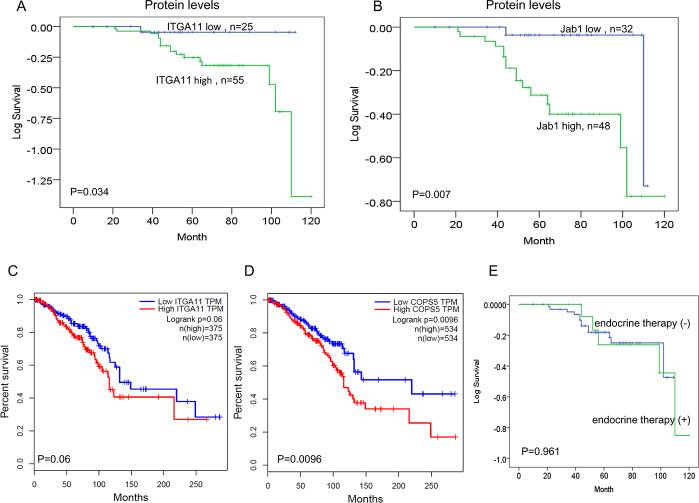 IGTA11 and Jab1/COPS5 predict survival in breast cancer.