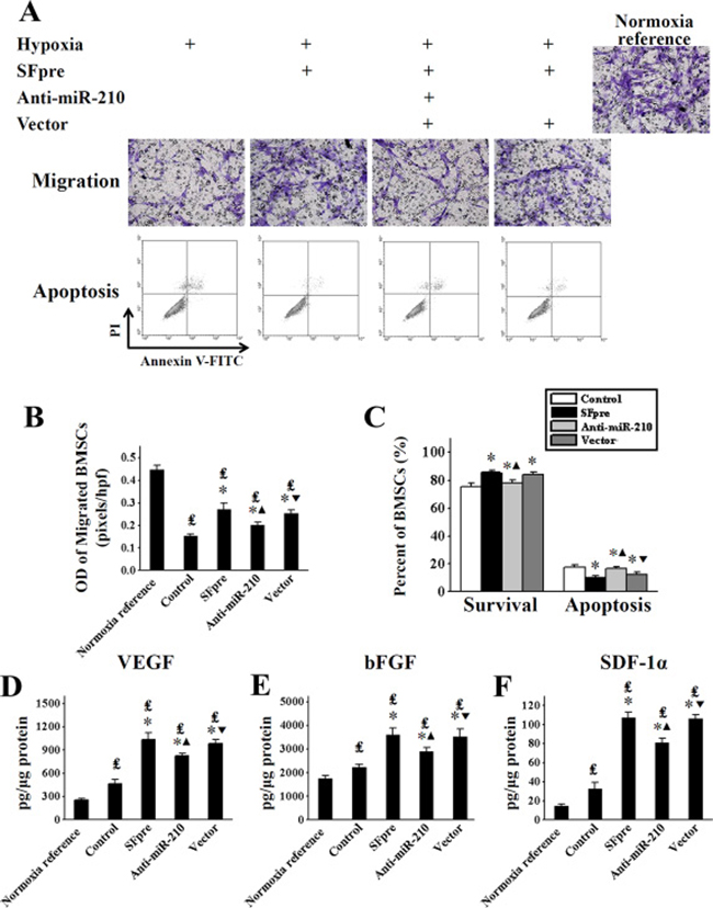 The in vitro assessment of BMSCs activation after exposure to sevoflurane.
