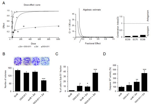 CLU knockdown enhances effects of ZOL treatment in OS cells.
