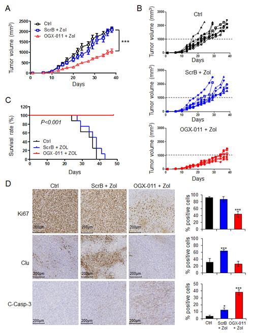 OGX-011 potentiates ZOL activity in MNNG/HOS osteosarcoma xenograft model.