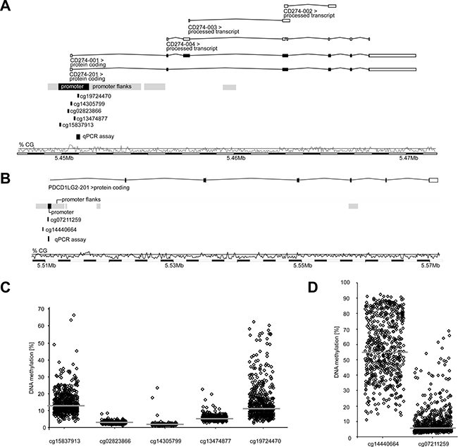 Organization and promoter methylation of the PD-L1 (CD274) and PD-L2 (PDCD1LG2) genes.