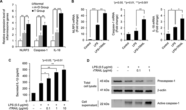 TRAIL upregulates the NLRP3 inflammasome signaling.