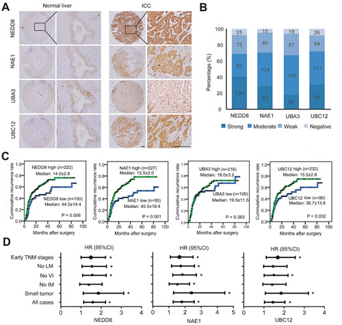 Expression and prognostic significance of neddylation pathway in ICC.