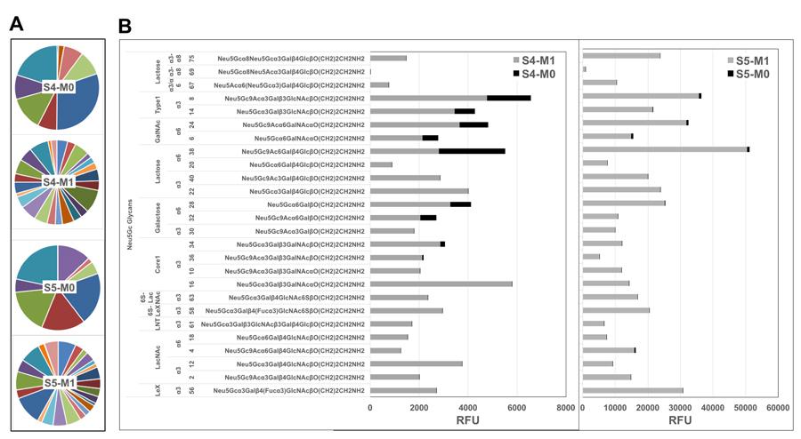 Diverse de novo anti-Neu5Gc IgGs repertoire post-ATG.