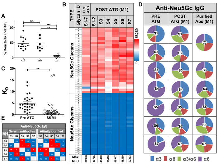 Characterization of affinity-purified anti-Neu5Gc IgGs pre- and post-ATG.