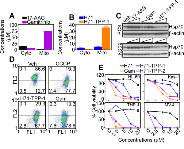 Mitochondria-targeted PU-H71 causes acute organelle dysfunction.