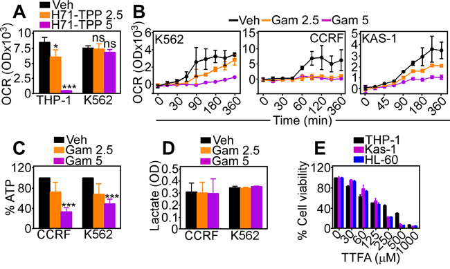 Inhibition of mitochondrial Hsp90 induces metabolic defects.