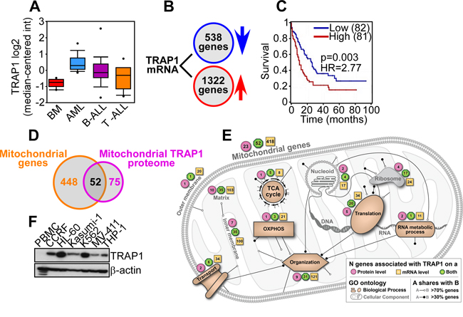 Bioinformatics analysis of TRAP1 expression in AML.