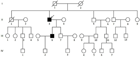 Pedigree of the MEN1 syndrome Han Chinese family with the MEN1 IVS9 + 1 G > C splicing donor mutation.