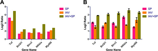 RT-PCR analysis of 5 randomly selected unigenes.