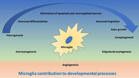 Oncotarget | Microglia at center stage: a comprehensive