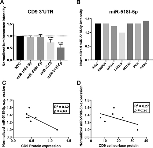 miRNAs predicted to regulate CD9 bind to the CD9 3'UTR in vitro.
