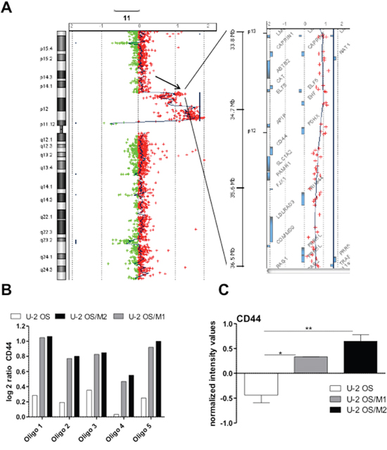 Oncotarget | CD44 drives aggressiveness and chemoresistance