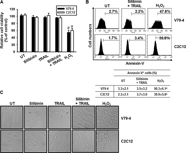 Effect of silibinin and TRAIL on cell viability of normal V79-4 and C2C12 cells.