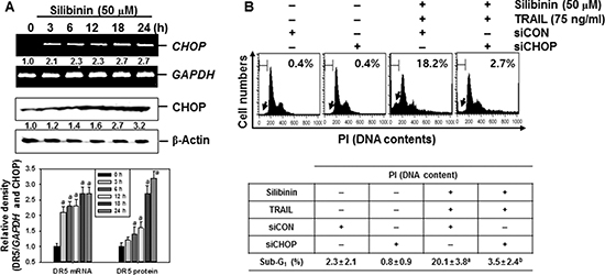 CHOP-dependent DR5 regulation by ROS-mediated ER stress in response to silibinin/TRAIL.