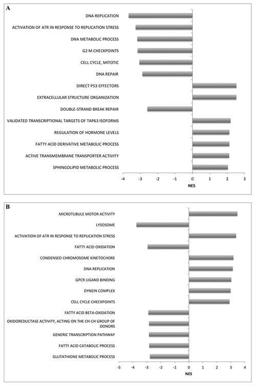 Enriched gene sets identified in (A) 22Rv1 and (B) DU-145 cells for upregulated genes following DAC treatment (positive normalized enrichment score (NES)) and downregulated genes post-DAC treatment (negative NES).