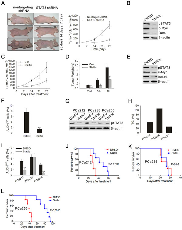 STAT3 blockade inhibited the development of tumor and ALDH