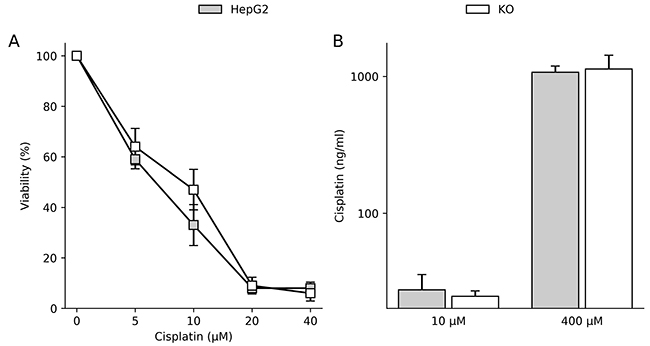 ATP7B expression does not affect cisplatin sensitivity in hepatoma cells.