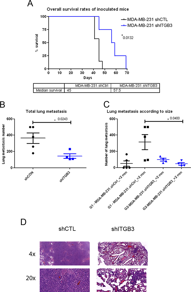 Survival and lung metastasis after intravenous inoculation with ITGB3-depleted MDA-MB-231 human breast cancer cells.