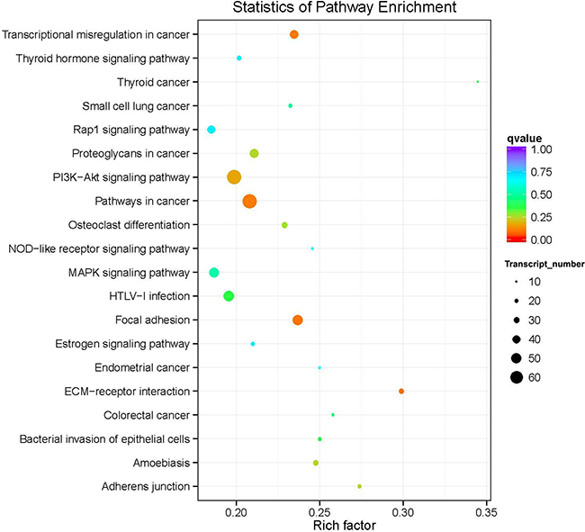 Top 20 over-represented KEGG pathways of the common differentially expressed genes.