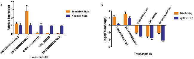 Relative expression analysis of candidate mRNA and lncRNAs in sensitive and normal skin tissues, as determined by qRT-PCR.