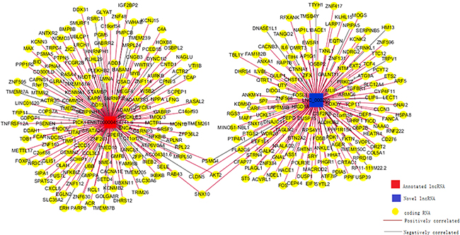 Co-expression network for one annotated and one novel lncRNA.
