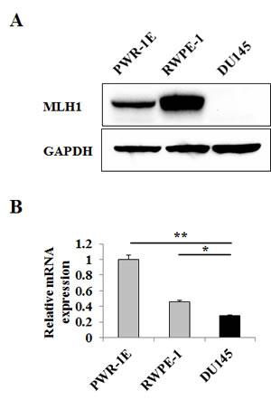 (PDF) DNA mismatch repair gene MLH1 induces apoptosis in