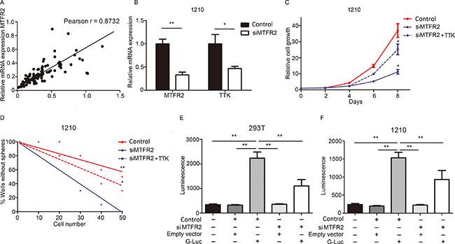 TTK is transcriptionally regulated by MTFR2.