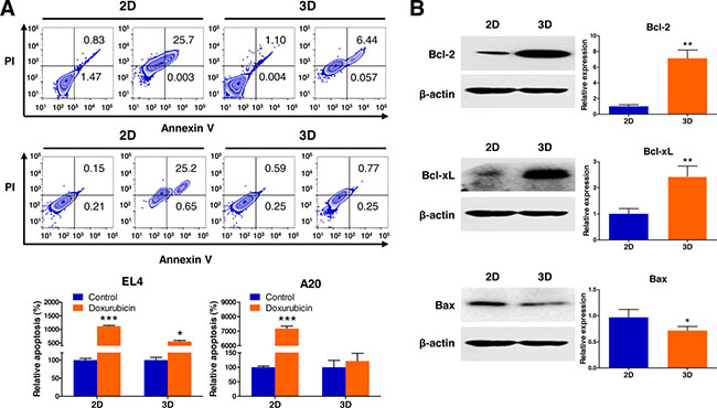 Analysis of apoptotic state in 3D lymphoma spheroids compared to their 2D cultures.