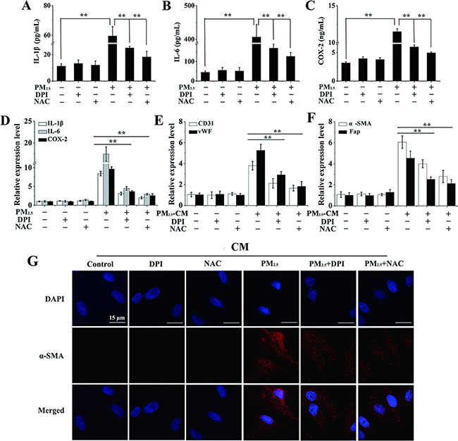 The differentiation of BMSCs provoked by inflammatory cytokines is mediated by PM2.5-induced ROS generation.