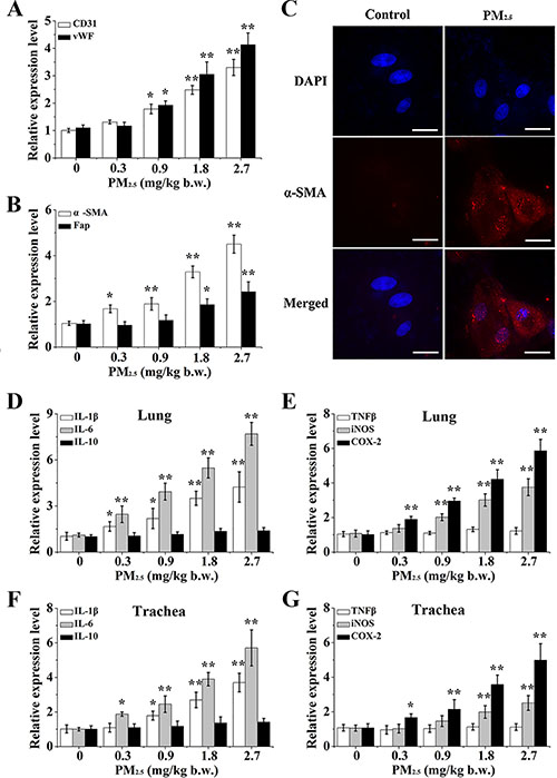 The differentiation of BMSC and inflammatory response caused by PM2.5 in vivo.