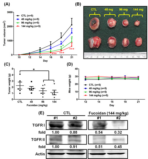 Fucoidan inhibits tumorigenesis in LLC1 cell-xenograft male C57BL6 mice.