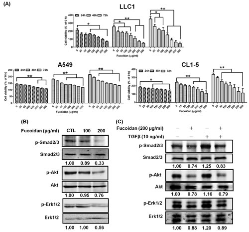 Fucoidan inhibits proliferation and decreases TGFR-mediated Smad and non-Smad pathway activity in lung cancer cells.