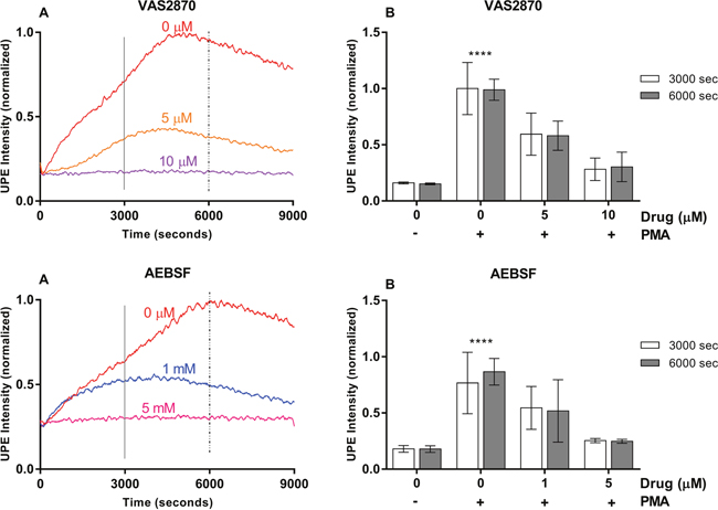 VAS2870 and AEBSF effects on UPE profile in HL-60 cells.