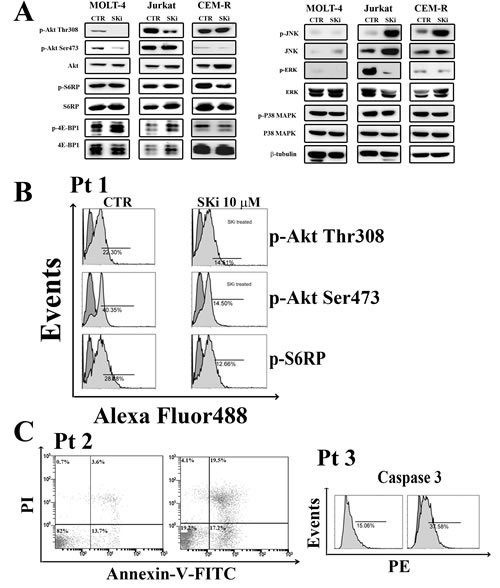 Effect of SKi on the phosphorylation status of signaling pathways controlling survival, proliferation.