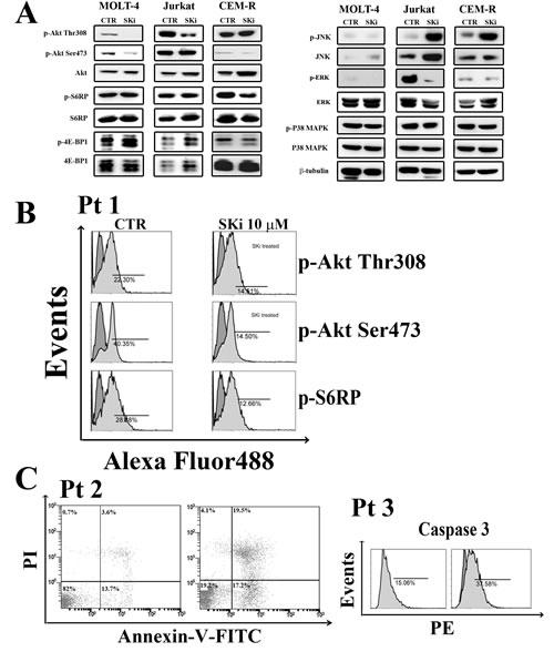 Effect of SKi on the phosphorylation status of signaling pathways controlling survival, proliferation.