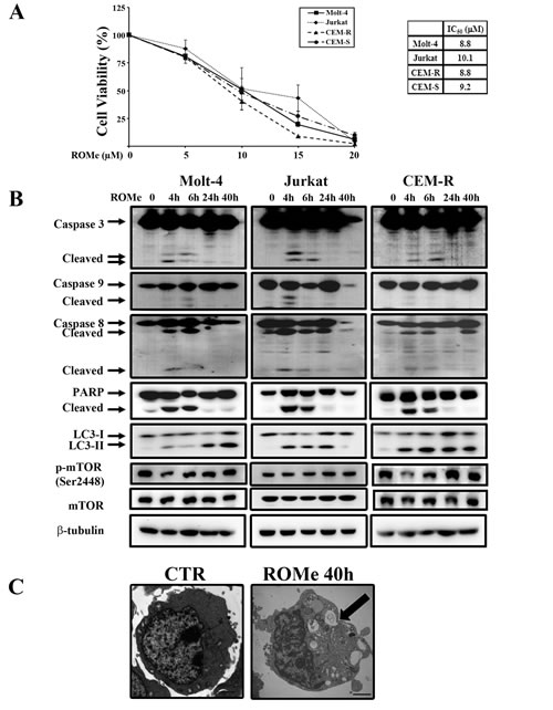 ROMe induces autophagy in Molt-4, Jurkat and CEM-R cells.