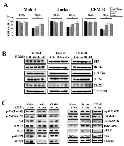 ROMe induces an autophagic cell death without the activation of the ER stress/UPR pathway.