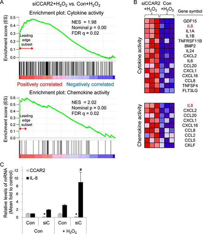 CCAR2 deficiency upregulates cytokine and chemokine following H2O2 treatment.