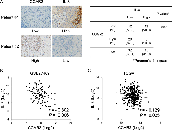CCAR expression in tissues from cervical cancer patients is negatively correlated with that of IL-8.