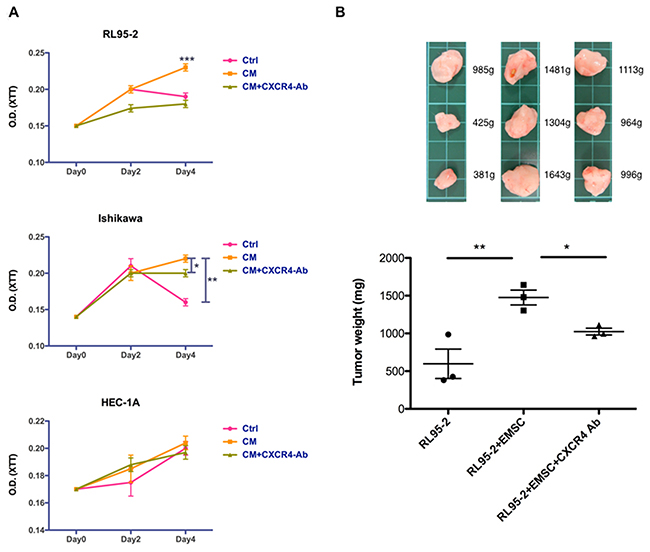 Enhanced proliferation and tumorigenesis of RL95-2 cells via the EMSCs.
