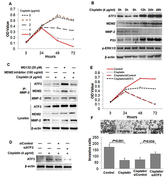 Cisplatin suppressed the invasion of ESCC cells by inducing the expression of ATF3.