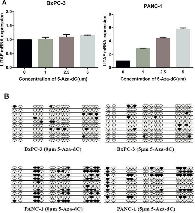 LITAF promoter methylation regulates LITAF expression in pancreatic carcinoma cells.