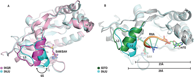 "Identification of a ""closed"" conformation of the RNA binding cleft in the SAH-bound MTase structure."