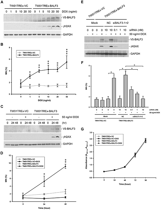 Effect of EBV BALF3 expression on genomic instability and growth of NPC cells.
