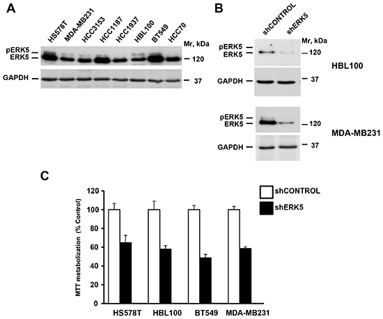 ERK5 controls proliferation of TNBC cell lines.