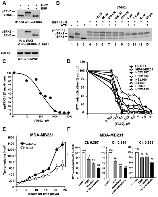 Effect of TG02 on ERK5 activity and on proliferation of TNBC cells.