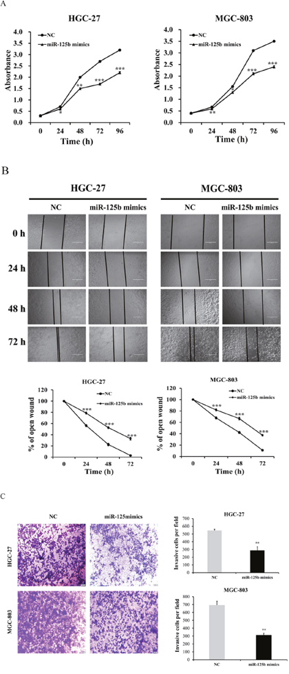 miR-125b expression levels inhibited the proliferation, migration and invasion abilities of HGC-27 and MGC-803 cells.