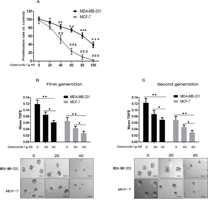 Celecoxib suppresses breast cancer cell proliferation, CSC growth and self-renewal.