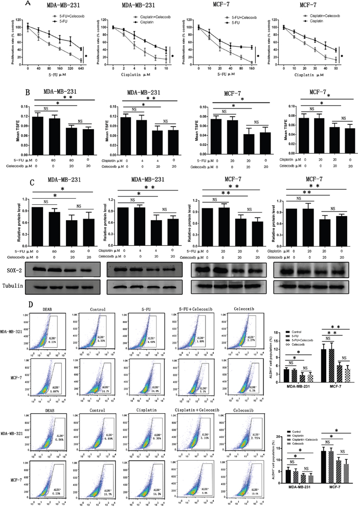 Celecoxib sensitizes breast cancer cells to chemotherapeutic drugs by selectively targeting CSCs.